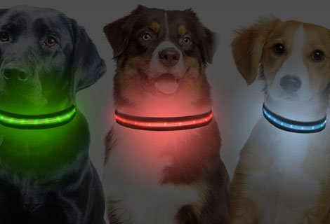 Осигурете на домашния си любимец безопасност и модна визия със Светеща LED каишка само за 5.90 лв.
