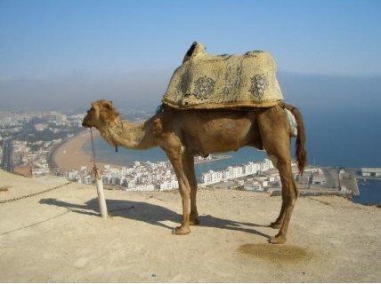 ПРОМО! ПОЧИВКА в Агадир, Мароко: Самолетен билет + 7 нощувки на All Inclusive в хотел Les Almohades Beach Resort Agadir